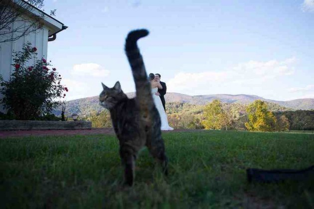 Wedding photo + outdoors + barn cat = awesome photobomb! - Imgur