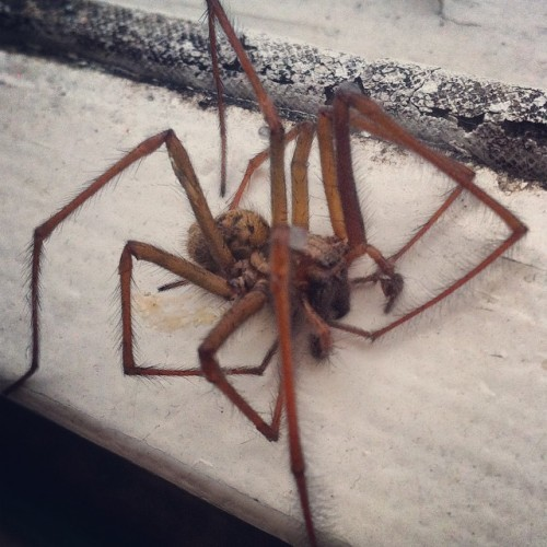 Ireland's 'giant spider invasion' is real... but here's ...