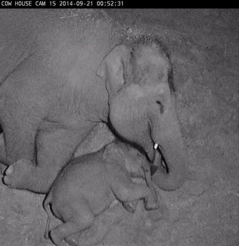 elephants-zoon