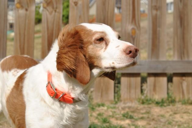Wind in her ears