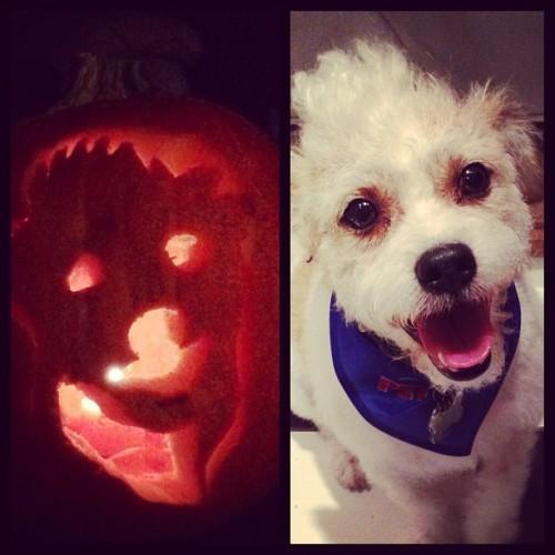#pumpkinfail