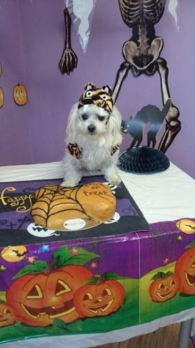 The Doggie Lodge's Photos - The Doggie Lodge   Facebook