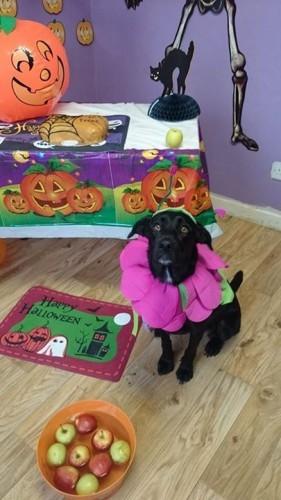 Mobile Uploads - The Doggie Lodge   Facebook