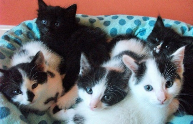 Cat of the Day - Lilly's kittens A beautiful ...