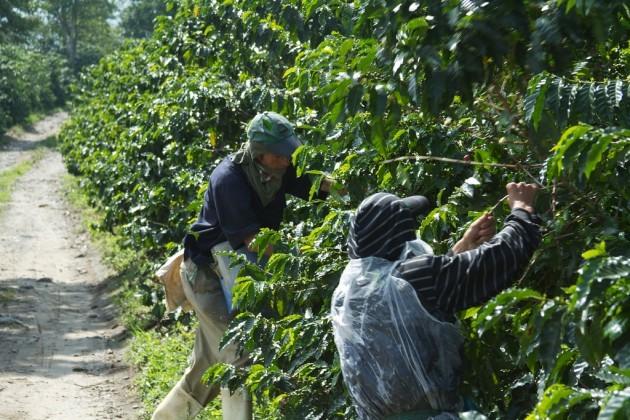 Colombia - Coffee Triangle 012 - coffee plantation tour