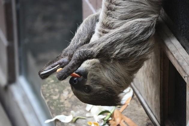 London Zoo - Stock