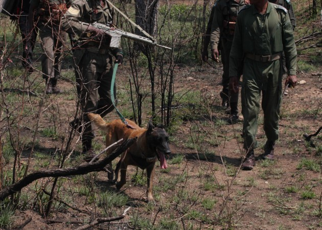 South Africa Dogs and Rhinos
