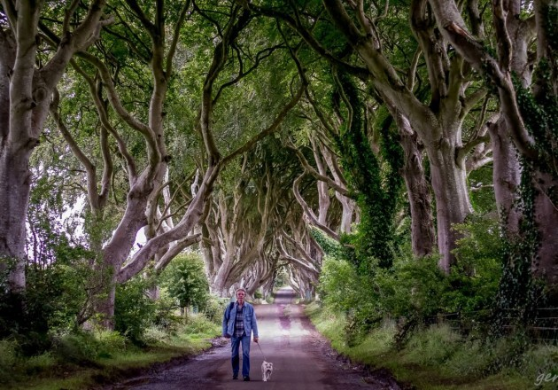 ?Runner Up in the Adult Category of the 2014 National Heritage Week Photo Competion was Geraldine Coleman from Antrim with her image 'Dark Hedges' taken in Stanucom, Antrim