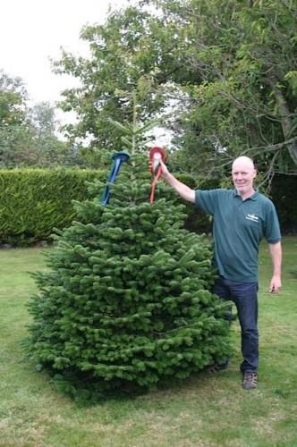 Irish Christmas Trees's Photos - Irish Christmas Trees | Facebook