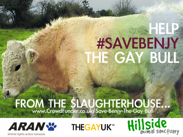 This Is The Sanctuary Benjy The Gay Bull Is Leaving For Tomorrow