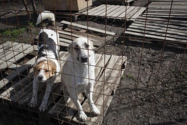 Sochi Rescue Dog Odyssey