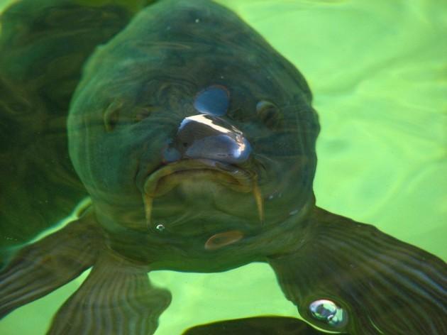 Having sex with fish