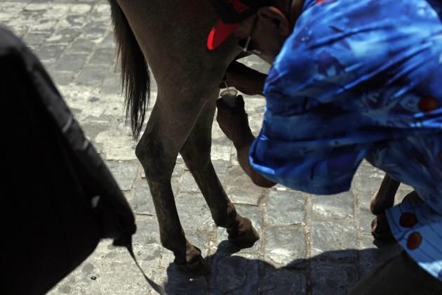 Chile Donkey Milk Photo Essay