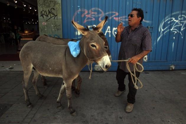 APTOPIX Chile Donkey Milk Photo Essay