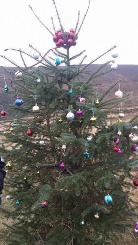 wicklow tree 1