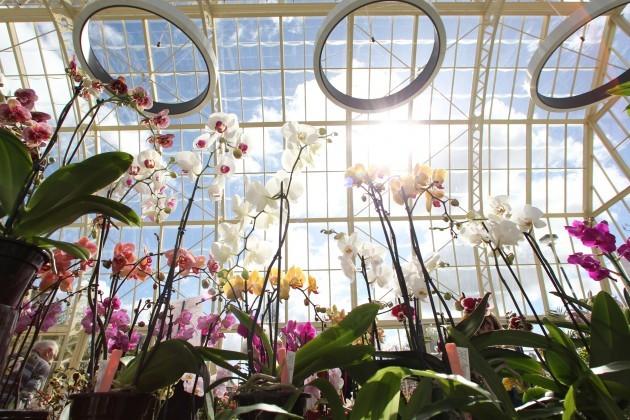 Dublin Orchid Fairs