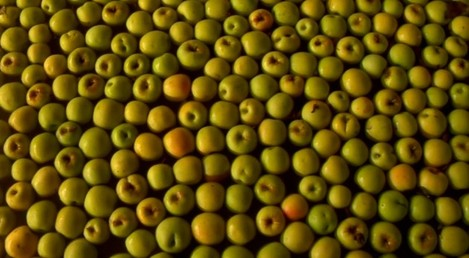 golan apples a