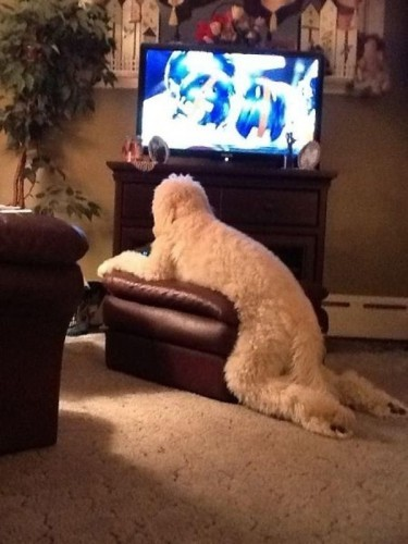 a.baa-Dog-Watching-TV-In-Strange-P
