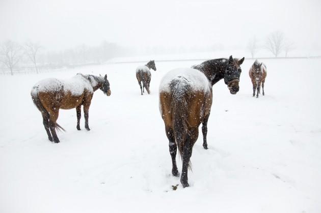 Winter Weather Kentucky