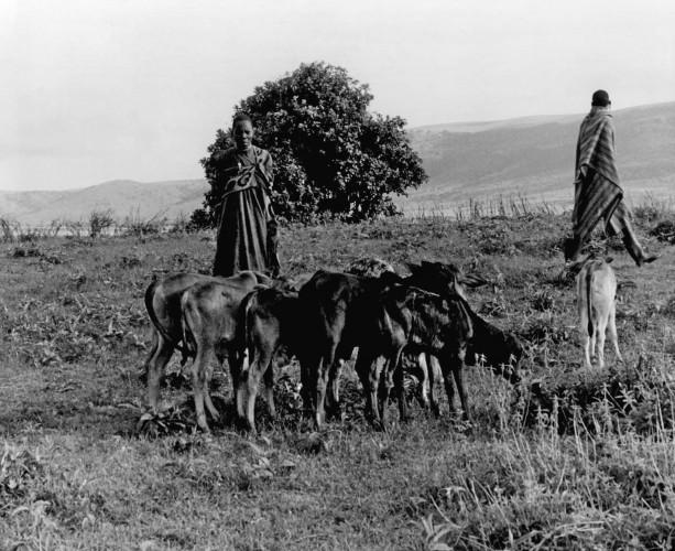 Masai Shepherds - Kenya