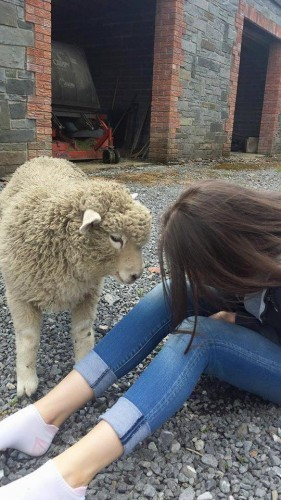 Dublin girl starts Facebook petition to save pet sheep from