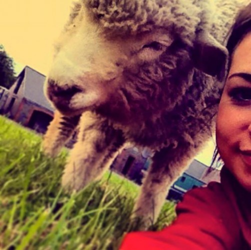 Ernie the pet sheep from Dublin has been saved from the