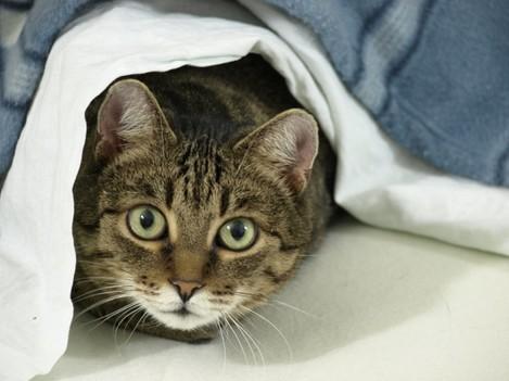 Misko The Cat