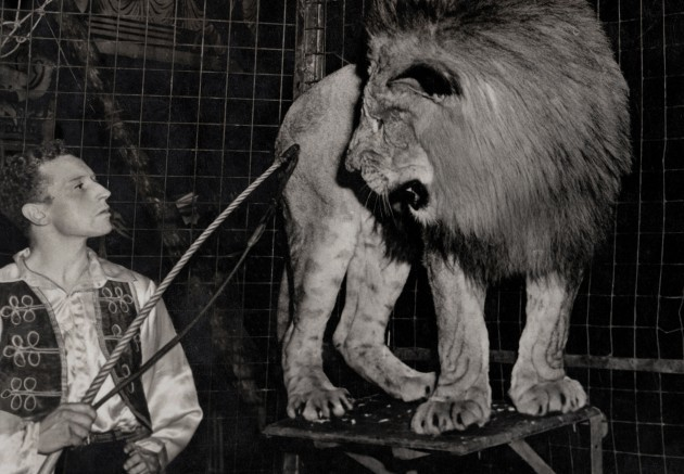 Bill Stephen's in cage with lion