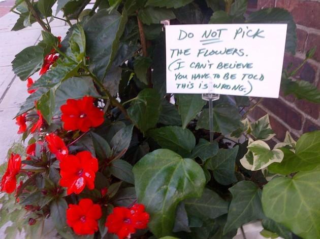 Passive Aggressive Florist