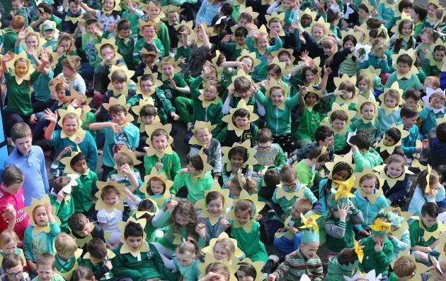 Daffodil Day for Irish Cancer Society