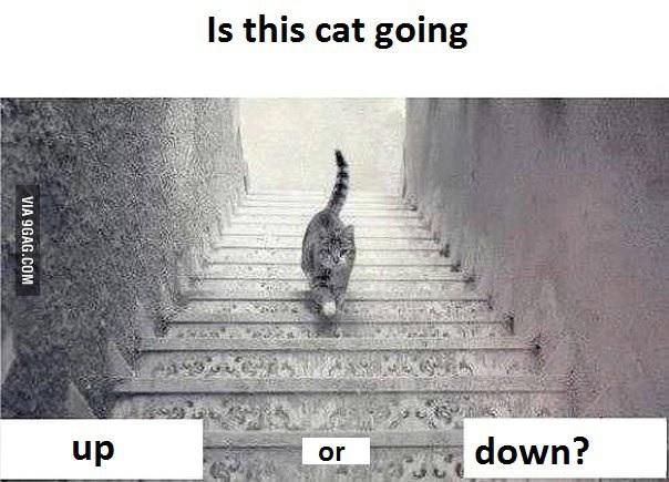 catdpwn