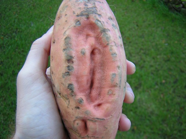 Til A Yam That Looks Like A Vagina Is The Top Result When You Google Image