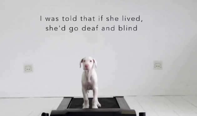 Man who didn't know how long his puppy had to live filmed