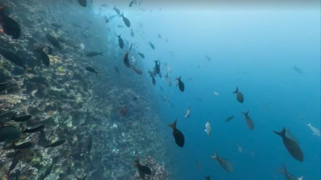 these-steep-underwater-sea-mountains-known-as-gordons-rocks-in-the-galapagos-islands-provide-a-habitat-for-a-whole-variety-of-marine-life