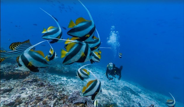 the-sea-just-north-of-muli-kandu-in-the-maldives-attracts-lots-of-colorful-fish-including-oriental-sweetlips