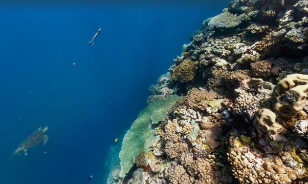 the-mantis-reef-is-one-of-the-best-places-to-see-silver-tip-sharks-in-the-great-barrier-reef-system