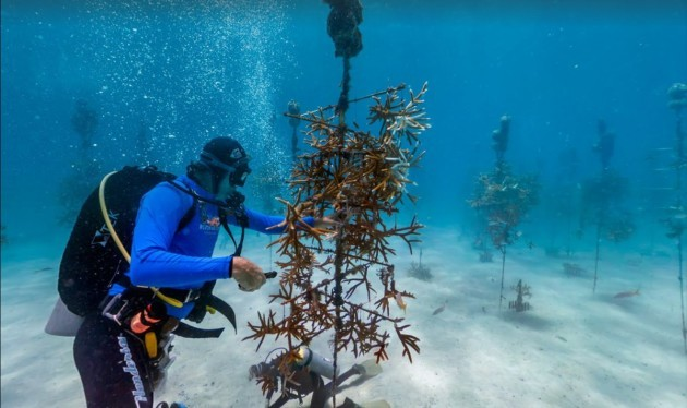 this-is-the-coral-nursery-in-the-florida-keys