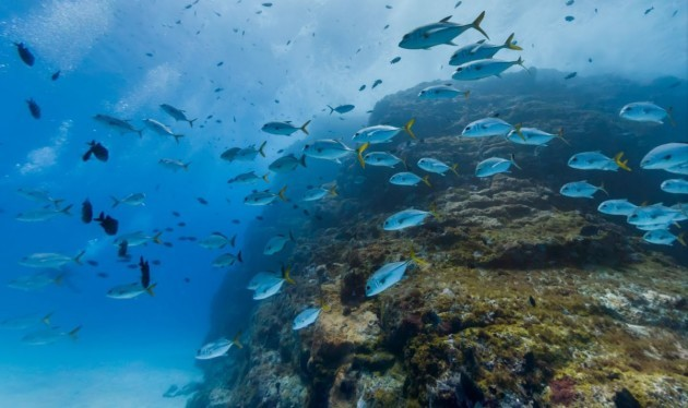 a-school-of-fish-in-the-trinta-reis-dive-spot-in-fernando-de-noronha