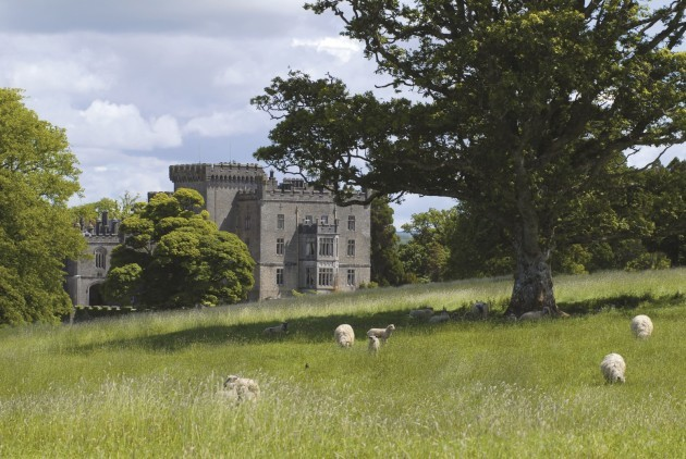 Repro Free - Markree Castle's resident flock of sheep