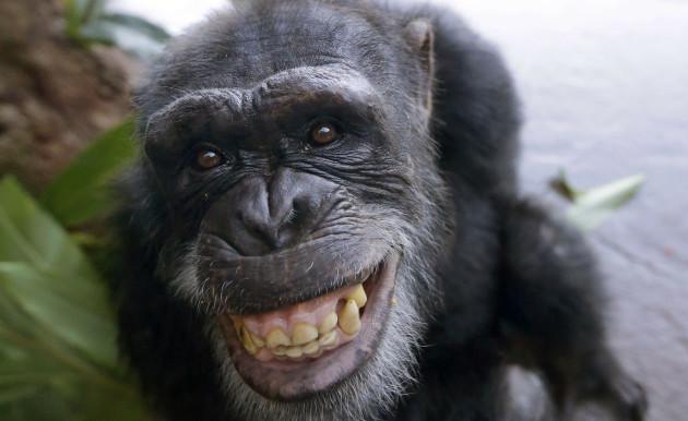 chimpcut