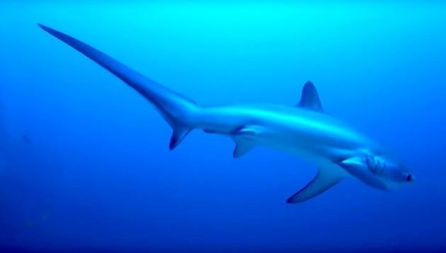 SHARK14