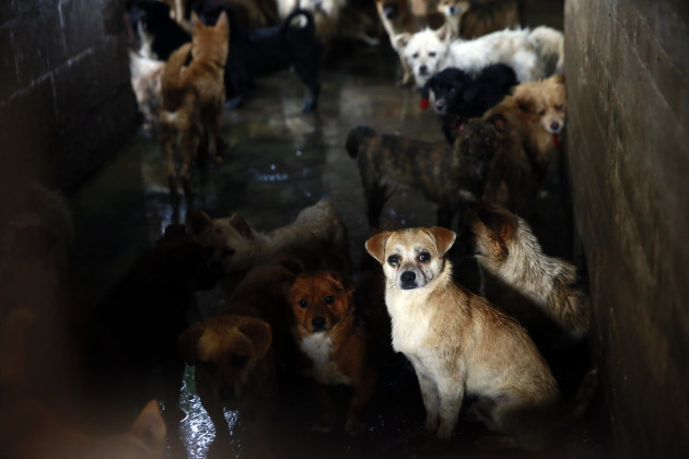 Humane Society International visits dog meat markets and slaughterhouses in Yulin, China