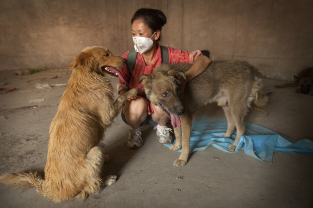 Beijing Rescue of Dogs Headed For The Dog Meat Trade