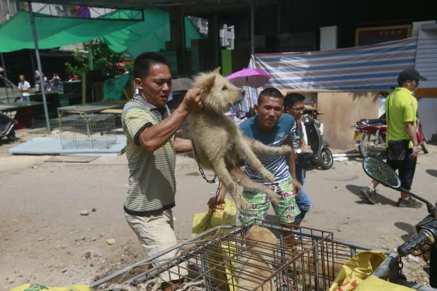 Humane Society International visits Yulin, China, during Dog Meat Festival