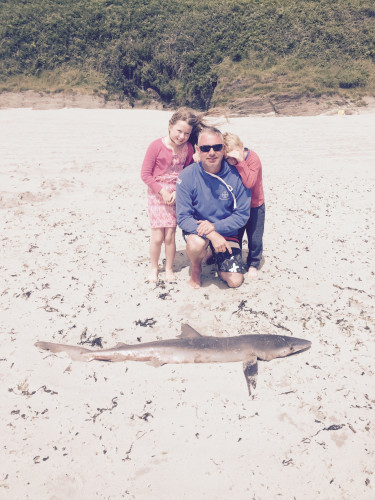 shark greg