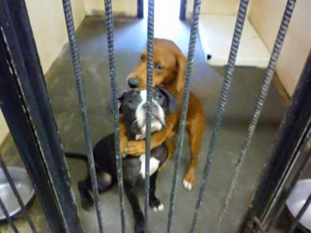 Timeline Photos - Angels Among Us Pet Rescue | Facebook