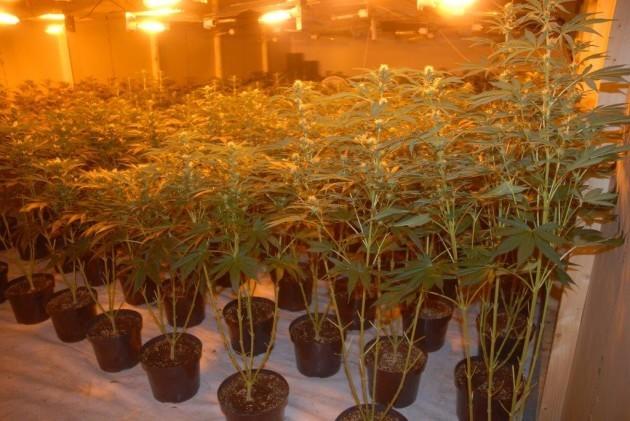 Ash Drugs 1 (1)