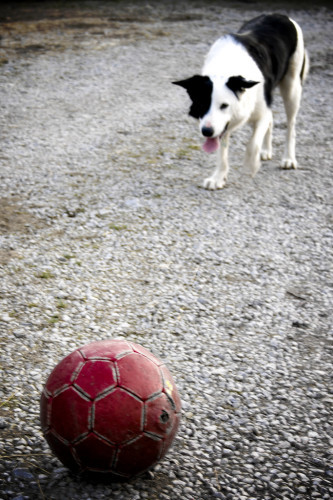 Meet moss the dog & his red ball