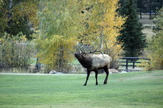 Travel Trip Colorado Elk