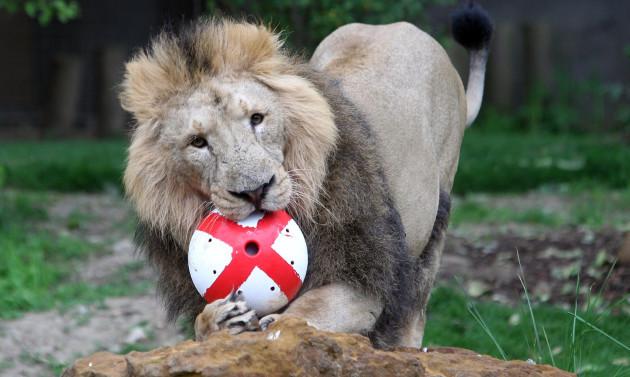 London Zoo lions